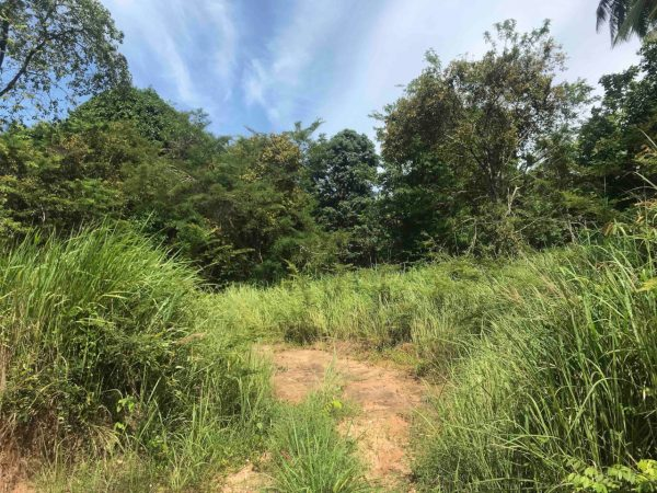 2.5 Rai With House To Renovate -land+villa-Nai Wok-koh-phangan-real-estate-development-investment-program-thailand-construction-building-villa-house-for-rent-for-sale-business-lease-hold