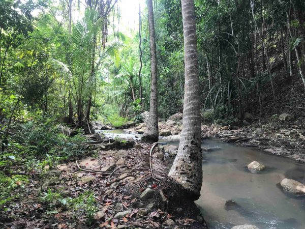 4 Plots Of Land-Land-Haad Salad-koh-phangan-real-estate-development-investment-program-thailand-construction-building-villa-house-for-rent-for-sale-business-lease-hold