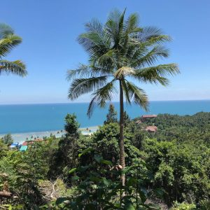 2 Rai Land With Very Beautiful Seaview-Land-Haad Yao-koh-phangan-real-estate-development-investment-program-thailand-construction-building-villa-house-for-rent-for-sale-business-lease-hold