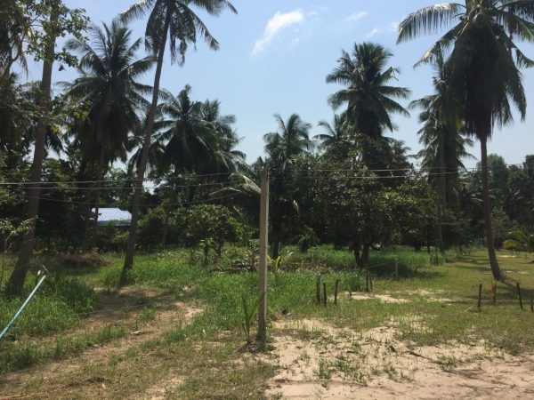 Phangan Development land for sale-Beautiful Coconut Flat Land - Hin Kong-koh-phangan-real-estate-development-investment-program-thailand-construction-building-villa-house-for-rent-for-sale-business-lease-hold