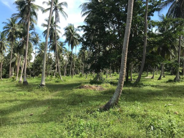 18 Rai On Flat Land -Land-Madeua Whan-koh-phangan-real-estate-development-investment-program-thailand-construction-building-villa-house-for-rent-for-sale-business-lease-hold