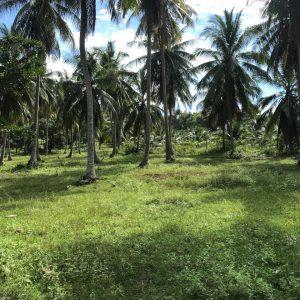 18 Rai On Flat Land - Madeua Whan