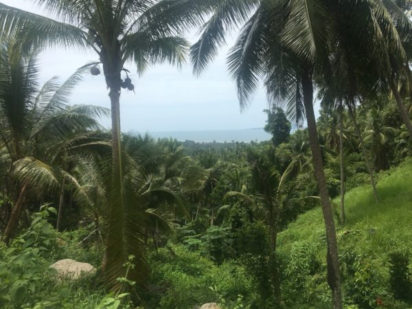 1.5 Rai Koh Samui's View -Land-Baan Tai-koh-phangan-real-estate-development-investment-program-thailand-construction-building-villa-house-for-rent-for-sale-business-lease-hold