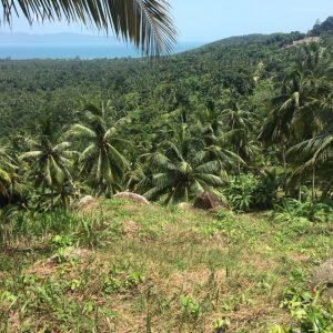 1.5 Rai With Superb Seaview-Land-Baan Tai-koh-phangan-real-estate-development-investment-program-thailand-construction-building-villa-house-for-rent-for-sale-business-lease-hold