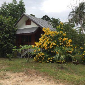 Small Villa Resort-Business-Wok Tum-koh-phangan-real-estate-development-investment-program-thailand-construction-building-villa-house-for-rent-for-sale-business-lease-hold