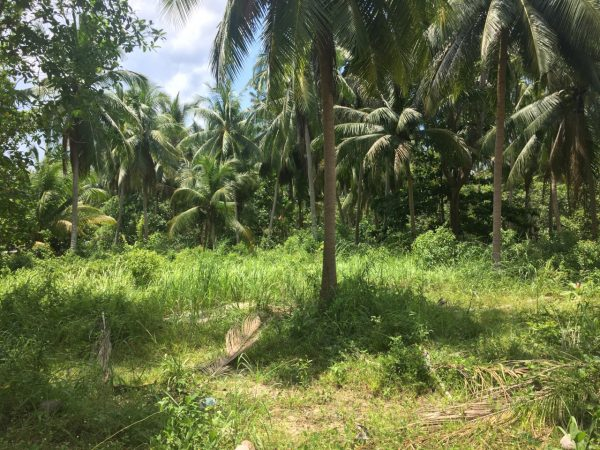 1 Rai On Prime Location-Land-Chalok Ban Kao-koh-phangan-real-estate-development-investment-program-thailand-construction-building-villa-house-for-rent-for-sale-business-lease-hold