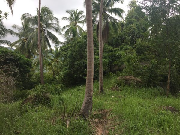 3 Rai Land With Seaview-Land-Baan Tai--koh-phangan-real-estate-development-investment-program-thailand-construction-building-villa-house-for-rent-for-sale-business-lease-hold