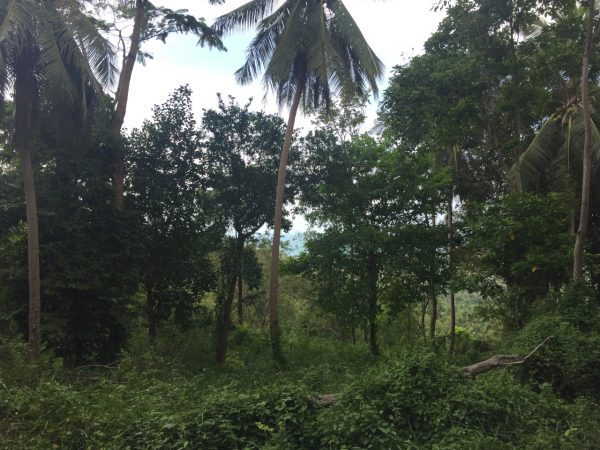 1.808 sqm With Breathtaking Seaview-Land-Baan Tai-koh-phangan-real-estate-development-investment-program-thailand-construction-building-villa-house-for-rent-for-sale-business-lease-hold